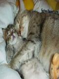 Echipa Miau Miau