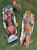 Nume Rase De Pisici