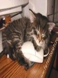 Pisica Alba Pisica Neagra
