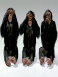 Jocuri Cu Maimute
