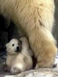 Poze Ursi, Jocuri Cu Ursi