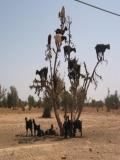Poze Animale In Desert