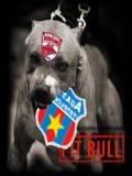 Dinamo Mananca Steaua