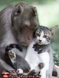 Maimute Si Pisici