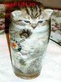 Pisici In Pahare De Sticla