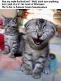 O Pisica Amuzanta