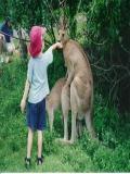 Imagini Cu Animalute