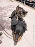 Poze Catei Si Pisici