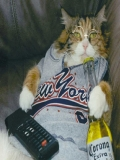 Pisica Se Uita La Televizor