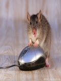 A Ales Gresit Mouse-ul