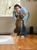 Poze Haioase Cu Pisici