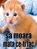 Poze Pisici Haioase
