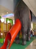 Poze Elefanti
