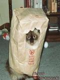 Poze Haioase Pisici