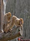 Poze Cu Maimute