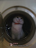 Poze Pisici