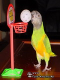 Poze Cu Papagali