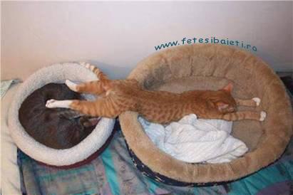 Poze Cu Pisicute