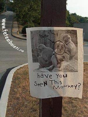 Nu Ai Vazut Cumva Maimuta