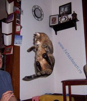 Poze Cu Pisici Matrix