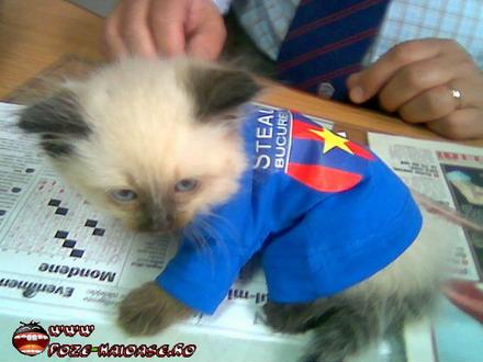 www poze haioase ro pozehaioase banelnicolita poze pisici steaua ...