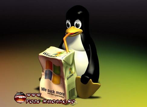 Jocuri Cu Pinguini 2021
