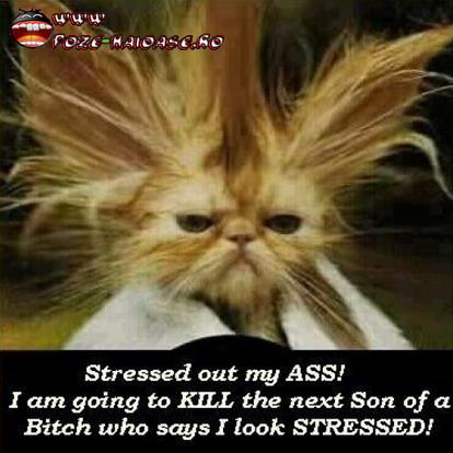 Poze Pisici Stresate 2021