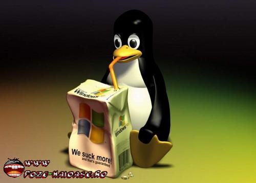 Pinguinu Bea Laptic 2021