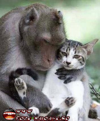 Maimute Si Pisici 2021