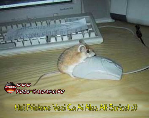 Poze Cu Soricelu Pe Mouse 2021