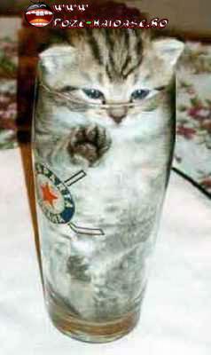 Pisici In Pahare De Sticla 2021
