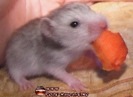 Imagini Si Poze Hamsteri 2021