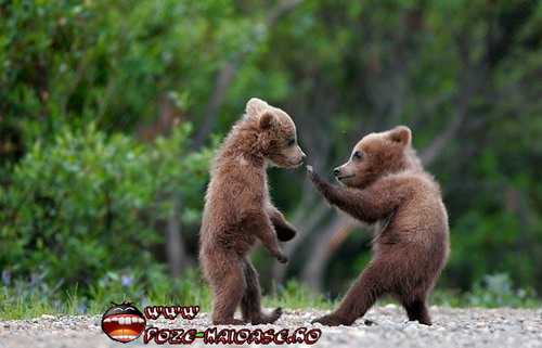 Doi Ursuleti Caratisti