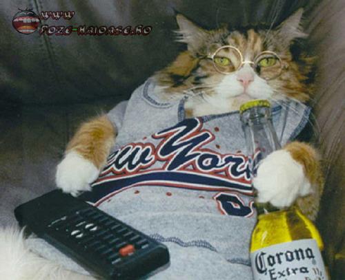 Pisica Se Uita La Televizor 2021