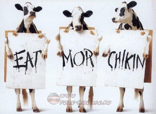 Si Vacile Protesteaza 2021