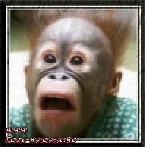 O Maimuta Speriata 2021