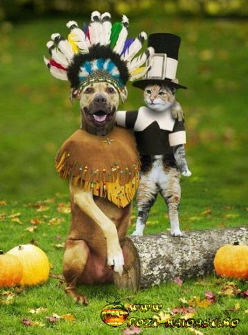 Caini, Pisici In Costum De Carnaval 2021