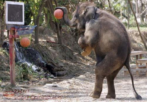Un Elefant Tare Destept 2021