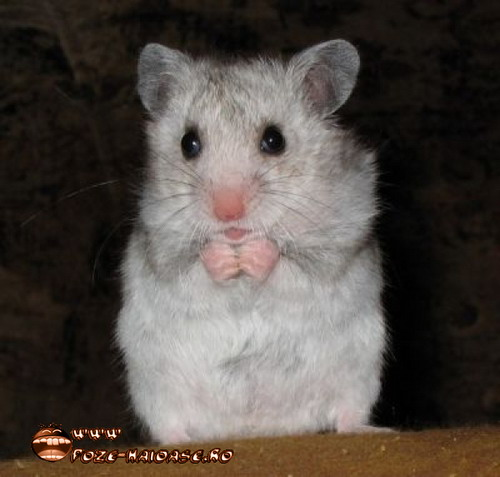 Hamsteri 2021