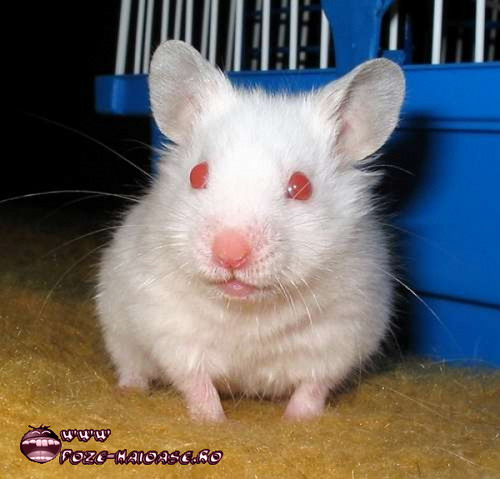 Hamster 2021