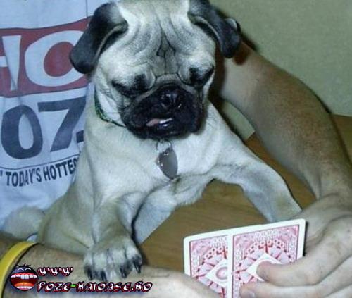 Jocuri Cu Carti 2021