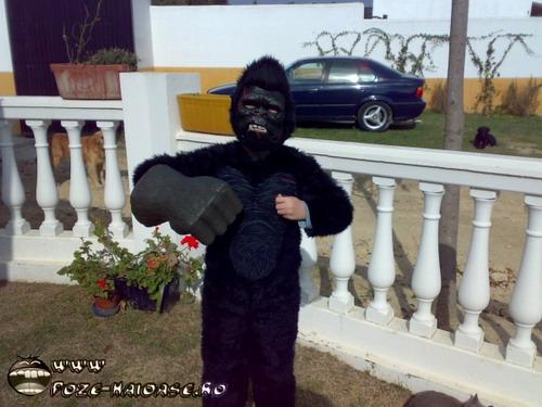 Poze Gorila 2021