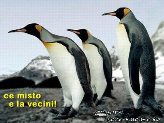 Poze Cu Pinguini 2021