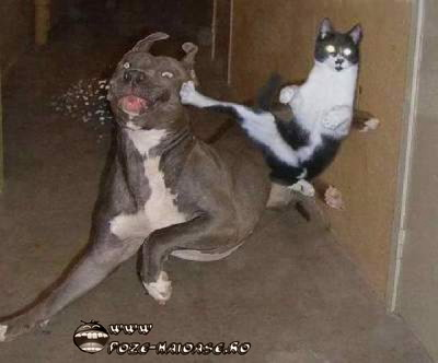 Caini Si Pisici 2021