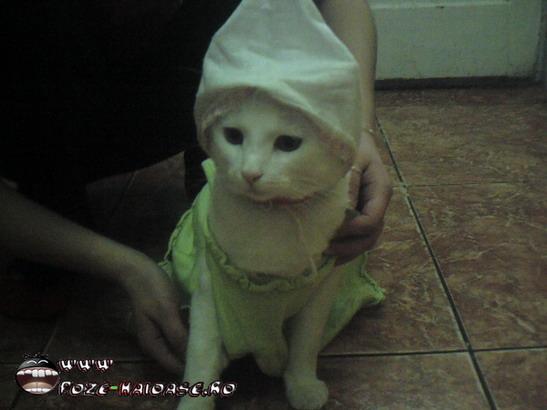 Poza Pisica